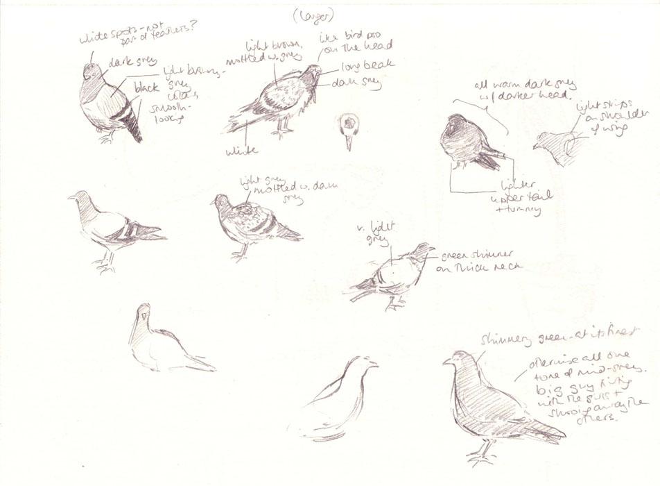 pigeons_