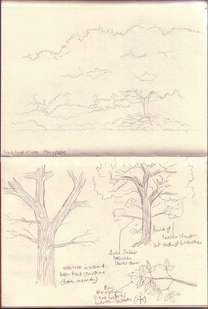 treesfield2_
